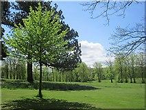 NS4762 : Brodie Park, Paisley by Richard Webb