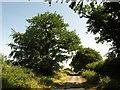 SS7617 : Road to Drayford by Derek Harper