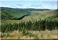SN8055 : Coed Nantyrhwch and Cwm Tywi, Powys by Roger  Kidd