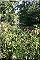 NT0676 : Looking towards Craigton Bridge by Anne Burgess