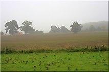NZ2114 : Field near Cliffe Bank by Mick Garratt
