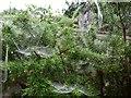 SX9065 : Spider's webs, Torre by Derek Harper