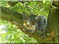 TL0387 : Squirrel and acorn in Barnwell Country Park by Richard Humphrey