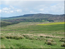 NY9398 : Rough pastures north of Herdlaw by Mike Quinn