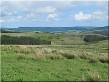 NY9398 : Rough pastures above Keenshaw Burn by Mike Quinn