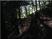 SE0023 : Sunlight in Cragg Vale woodland path by Graham Hewitt