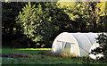 J4482 : Greenhouses near Helen's Bay by Albert Bridge
