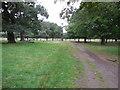 TQ2172 : Path in Richmond Park by Paul Gillett