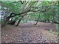 TL6101 : Mapletree Lane, near Fryerning Wood by Roger Jones