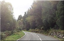 SH6441 : Through the woods east of Rhyd by John Firth