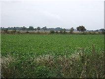 TF1122 : Crop field off Dyke Drove by JThomas