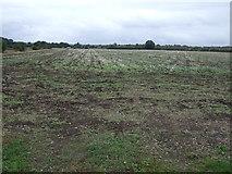 TF1020 : Farmland off Meadow Drove by JThomas
