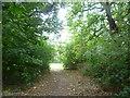 TQ3966 : Path through the woodland at Pickhurst Green by Marathon