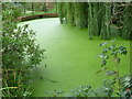 TQ4066 : A rather overgrown pond in The Knoll, Hayes by Marathon