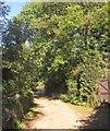 SX3661 : Lane at Penquite by Derek Harper