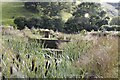 SO0953 : Bulrushes in the ponds by Bill Nicholls