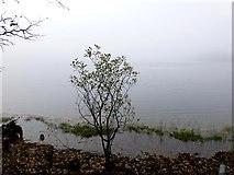 H5776 : Misty, Loughmacrory Lough by Kenneth  Allen