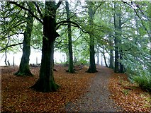 H5776 : Fallen leaves, Loughmacrory by Kenneth  Allen