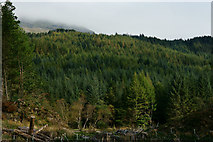 SH6441 : Woods Above Tan-y-Bwlch by Peter Trimming