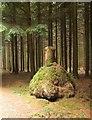 SS4608 : Tree stump, Upcott Wood by Derek Harper