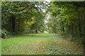 TQ6327 : Clearing through Batt's Wood by Julian P Guffogg