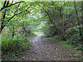 SO7637 : Woodland path above The Gullet by John Allan