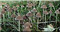 SK4570 : Fungi at the edge of a field by Andrew Hill
