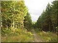 NT3058 : Track, Redside by Richard Webb