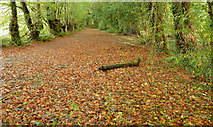 J4681 : Autumn leaves, Crawfordsburn by Albert Bridge