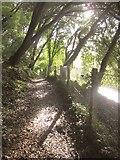 SX9065 : Path, Chapel Hill Pleasure Grounds by Derek Harper