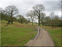 SK2671 : Track through Chatsworth Park by Trevor Rickard