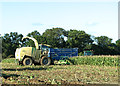 TG3314 : Forage maize silage harvesting by Evelyn Simak