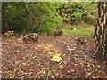 SX9066 : Bush and tree clearance, Browns Bridge Road by Derek Harper