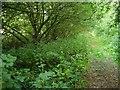 ST3123 : Widness Drove by Derek Harper