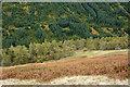 NN2790 : Slope descending towards River Gloy by Trevor Littlewood