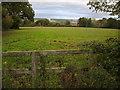 SJ2670 : Grazing field beside Oakenholt Lane near Field Farm by Maggie Cox