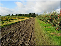 TR2757 : Muddy Track leading to Durlock Road by Chris Heaton