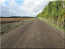 TR2657 : Wide Farm Track leading towards Wingham by Chris Heaton