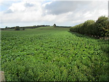 TR2557 : View by Dambridge Farm by Chris Heaton