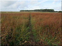 TR2457 : Footpath leading away from Wingham by Chris Heaton