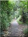 SU8003 : Path to Holy Trinity, Bosham by Rob Farrow