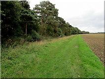 TR1958 : Edge of Oldridge Wood by Chris Heaton