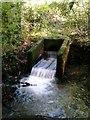 SX4861 : Weir Porsham Wood by timothy luckham