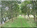 NY4074 : Path beside the Liddel Water by Paul Franks