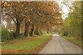 TF0304 : Racecourse Road by Richard Croft