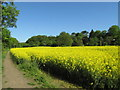 NZ1164 : Rapeseed Field near Wylam, Tyne Valley, Northumberland by Andrew Tryon