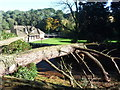 SZ0891 : Bournemouth: fallen tree at Meyrick Park by Chris Downer