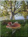 TF6928 : Fly Agaric, Sandringham House Park, Norfolk by Christine Matthews