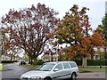 TL2412 : Autumn colour at a Welwyn Garden City roundabout by Christine Johnstone