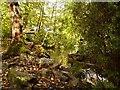 SD8204 : Stream in The Dell at Heaton Park by David Dixon